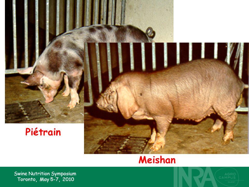 Swine Nutrition Symposium Toronto, May 5-7, 2010 Piétrain Meishan
