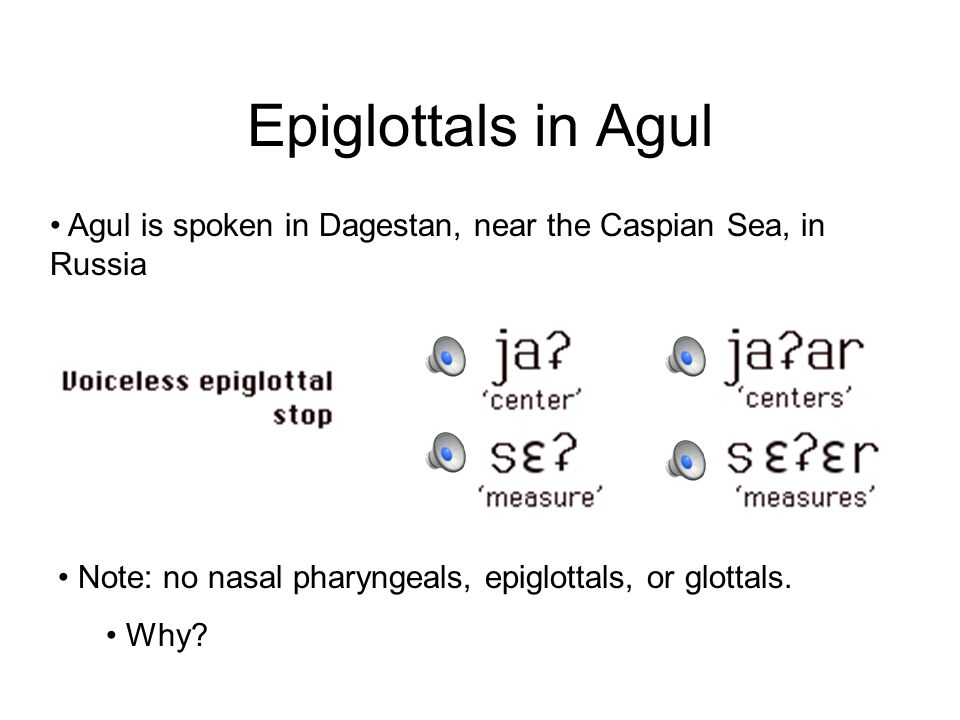 Epiglottals, Glottals There are no pharyngeal stops. However, there is an epiglottal stop: Peter says: Check out Stefans epiglottis There are also glo