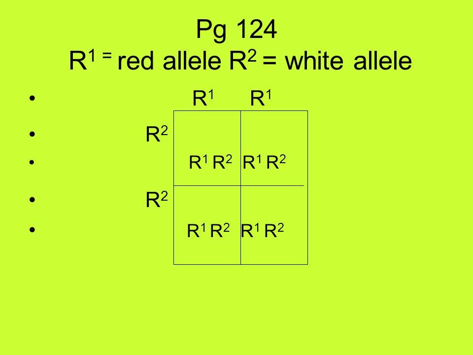 Pg 124 R 1 = red allele R 2 = white allele R 1 R 1 R 2 R 1 R 2 R 1 R 2 R 2 R 1 R 2 R 1 R 2