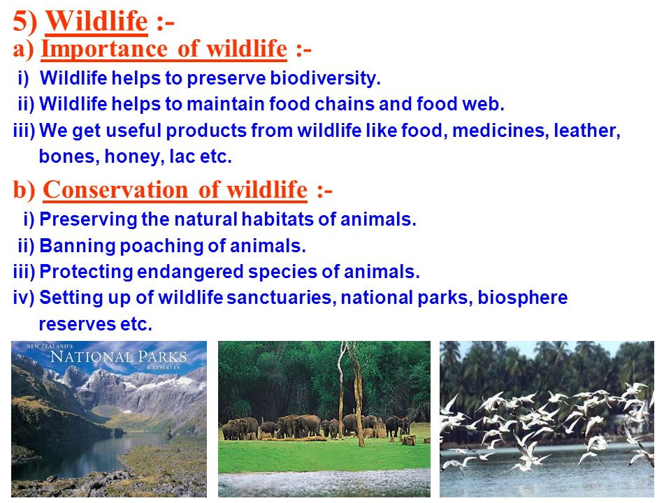 5) Wildlife :- a) Importance of wildlife :- i) Wildlife helps to preserve biodiversity. ii) Wildlife helps to maintain food chains and food web. iii)