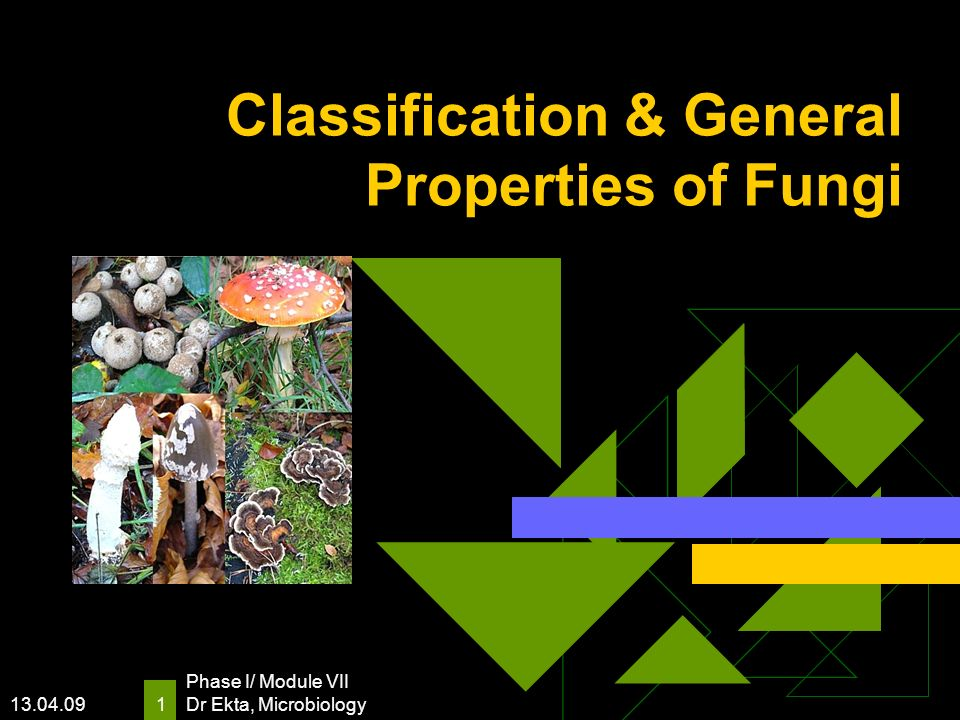 13.04.09 Phase I/ Module VII Dr Ekta, Microbiology 1 Classification & General Properties of Fungi
