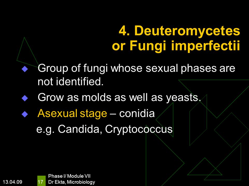 13.04.09 Phase I/ Module VII Dr Ekta, Microbiology 17 4. Deuteromycetes or Fungi imperfectii Group of fungi whose sexual phases are not identified. Gr