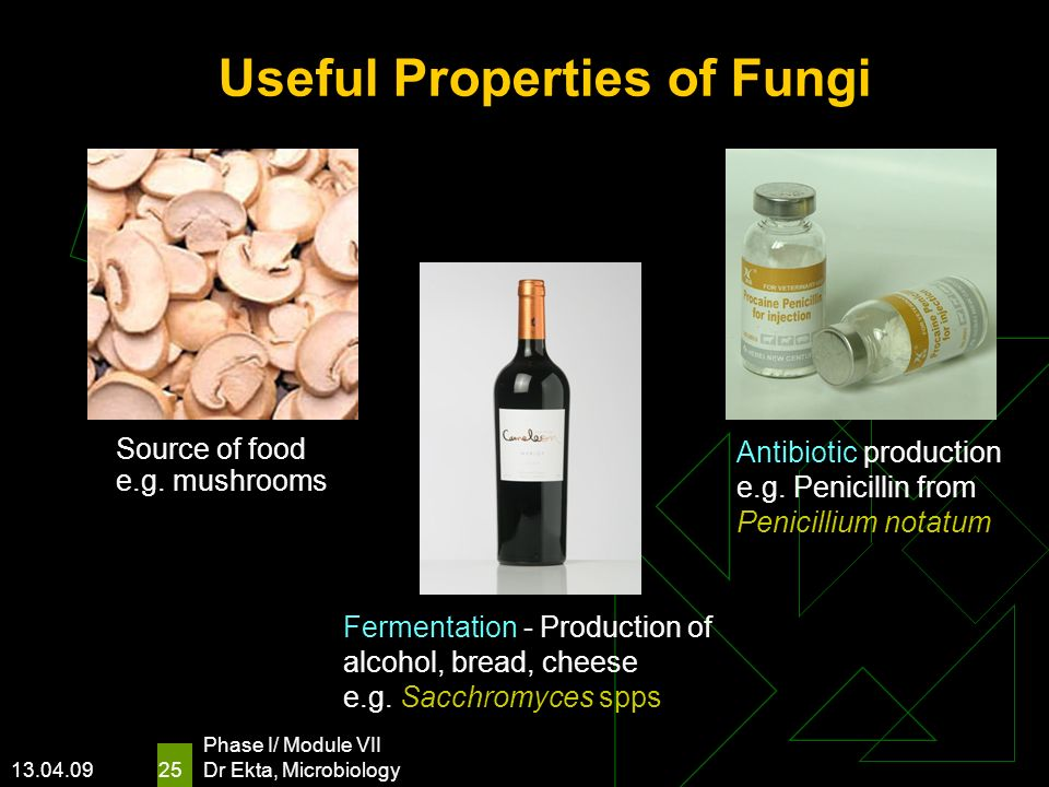 13.04.09 Phase I/ Module VII Dr Ekta, Microbiology 25 Useful Properties of Fungi Source of food e.g. mushrooms Fermentation - Production of alcohol, b