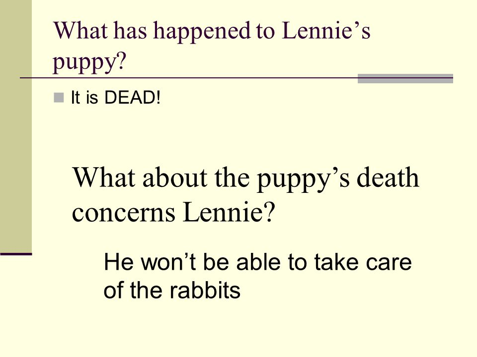 What has happened to Lennies puppy? It is DEAD! What about the puppys death concerns Lennie? He wont be able to take care of the rabbits