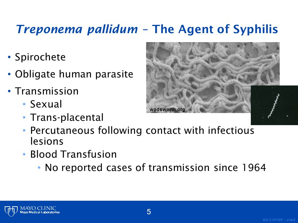 ©2012 MFMER | slide-6 Syphilis – The Great Imitator Infectious Dose: ~57 organisms 1 Incubation Period – 21 days (median) 3 clinical stages of syphilis Primary: Painless sore (chancre) at inoculation site Secondary: Rash, Fever, Lymphadenopathy, Malaise Tertiary/Latent: CNS invasion, organ damage The physician that knows syphilis knows medicine.