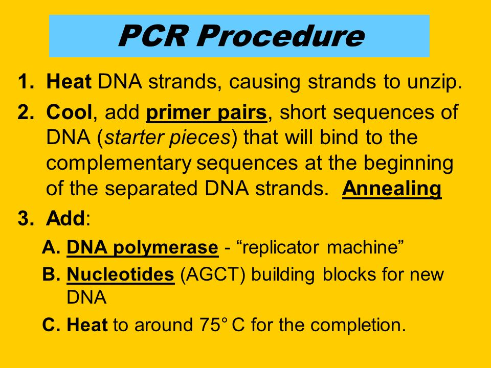 PCR Procedure 1.Heat DNA strands, causing strands to unzip.
