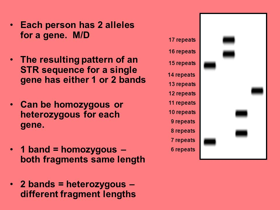 Each person has 2 alleles for a gene.