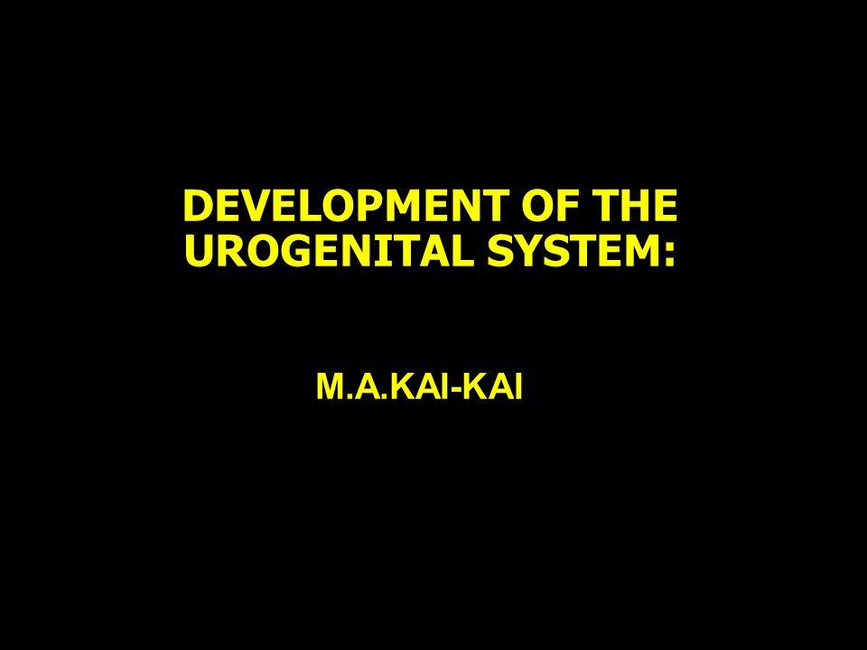 DEVELOPMENT OF THE UROGENITAL SYSTEM: M.A.KAI-KAI