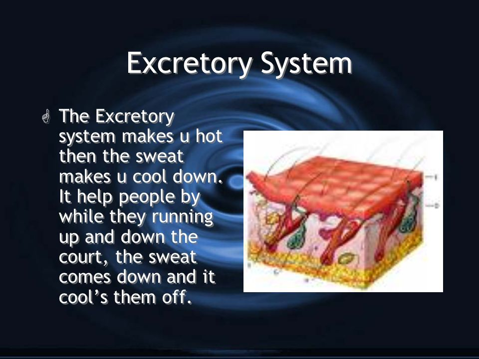 Excretory System G The Excretory system makes u hot then the sweat makes u cool down. It help people by while they running up and down the court, the