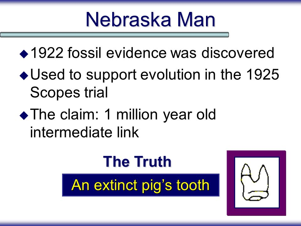 Nebraska Man 1922 fossil evidence was discovered Used to support evolution in the 1925 Scopes trial The claim: 1 million year old intermediate link An