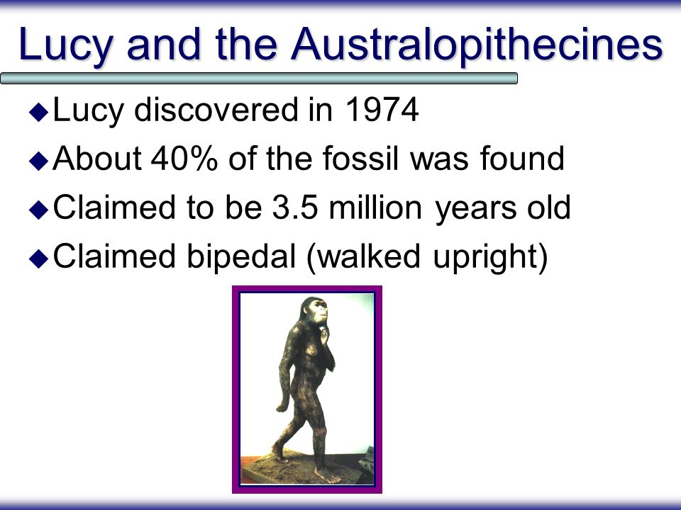 Lucy and the Australopithecines Lucy discovered in 1974 About 40% of the fossil was found Claimed to be 3.5 million years old Claimed bipedal (walked