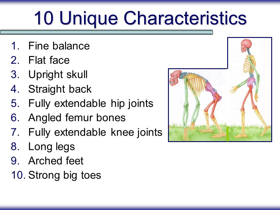 10 Unique Characteristics 1.Fine balance 2.Flat face 3.Upright skull 4.Straight back 5.Fully extendable hip joints 6.Angled femur bones 7.Fully extend