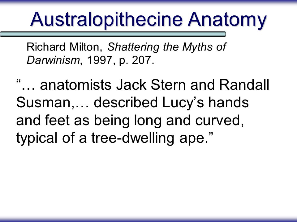 Australopithecine Anatomy … anatomists Jack Stern and Randall Susman,… described Lucys hands and feet as being long and curved, typical of a tree-dwel