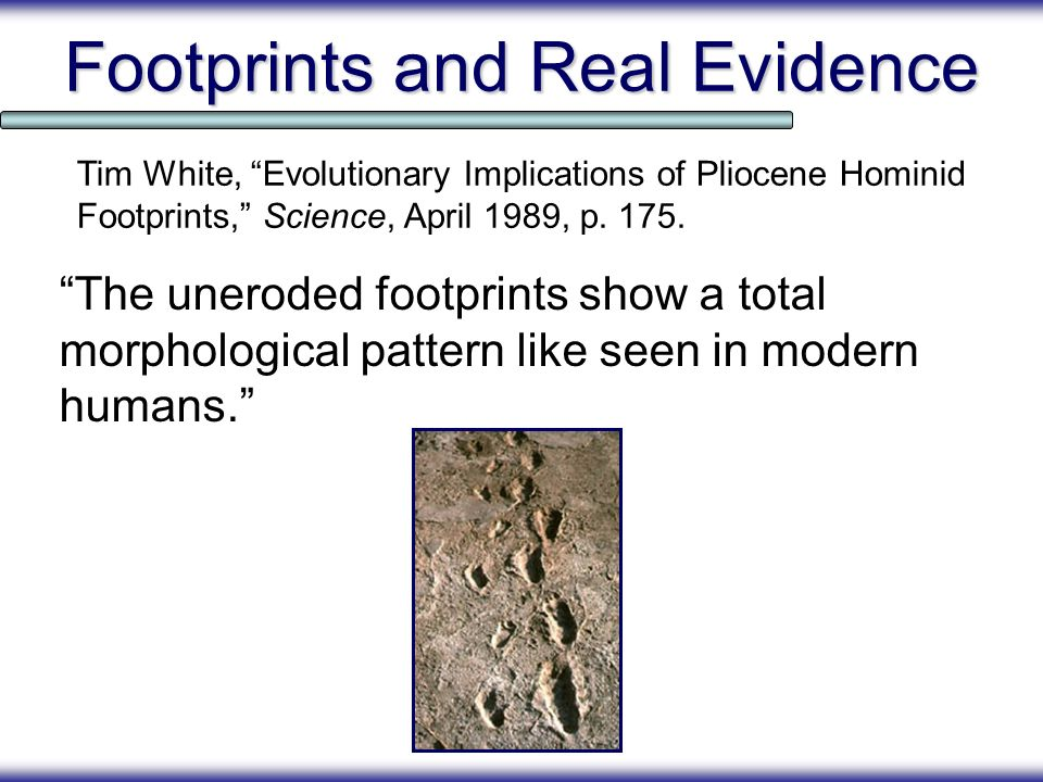 Footprints and Real Evidence The uneroded footprints show a total morphological pattern like seen in modern humans. Tim White, Evolutionary Implicatio