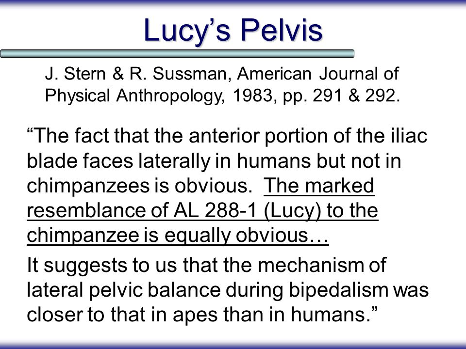 Lucys Pelvis The fact that the anterior portion of the iliac blade faces laterally in humans but not in chimpanzees is obvious. The marked resemblance