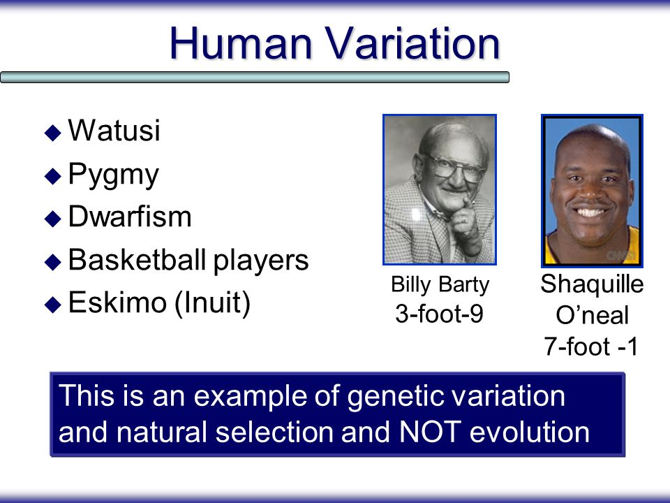 Human Variation Watusi Pygmy Dwarfism Basketball players Eskimo (Inuit) Billy Barty 3-foot-9 Shaquille Oneal 7-foot -1 This is an example of genetic v