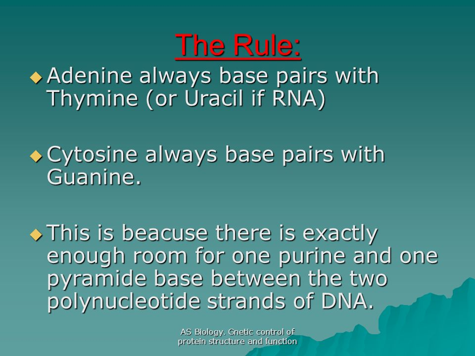 The Rule: Adenine always base pairs with Thymine (or Uracil if RNA) Adenine always base pairs with Thymine (or Uracil if RNA) Cytosine always base pai
