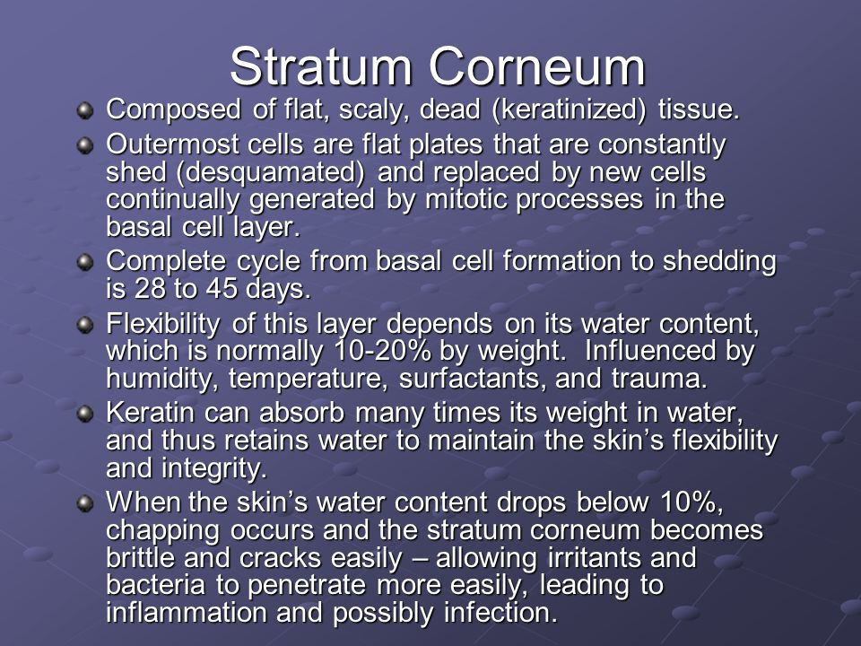 Stratum Corneum Composed of flat, scaly, dead (keratinized) tissue. Outermost cells are flat plates that are constantly shed (desquamated) and replace