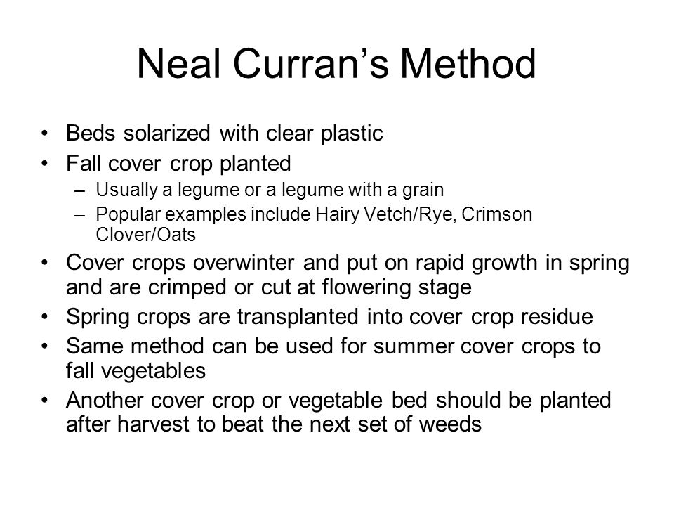 Neal Currans Method Beds solarized with clear plastic Fall cover crop planted –Usually a legume or a legume with a grain –Popular examples include Hai