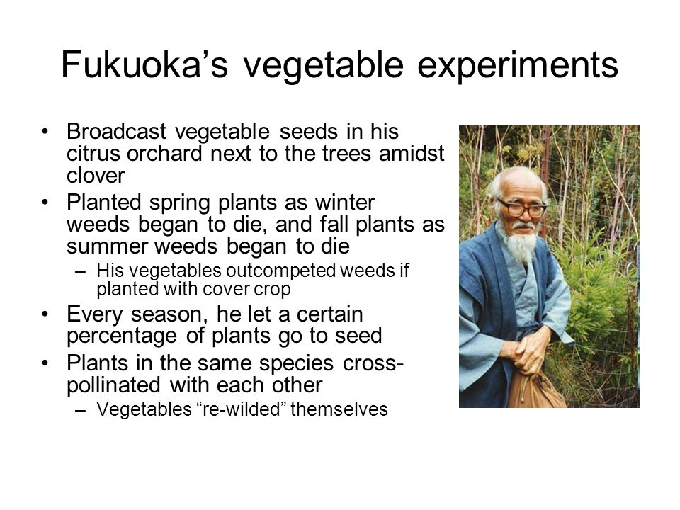 Fukuokas vegetable experiments Broadcast vegetable seeds in his citrus orchard next to the trees amidst clover Planted spring plants as winter weeds b