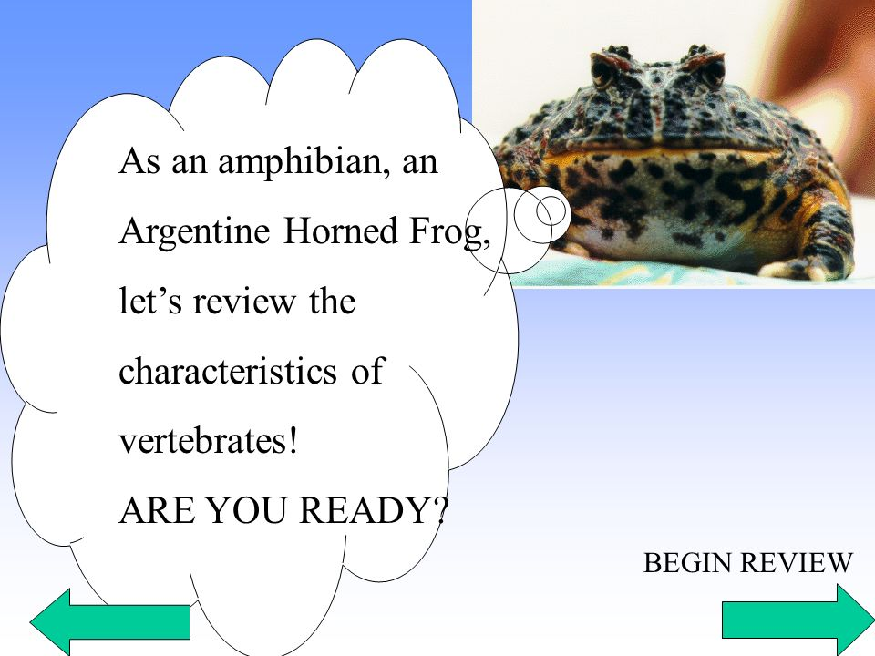 As an amphibian, an Argentine Horned Frog, lets review the characteristics of vertebrates! ARE YOU READY? BEGIN REVIEW
