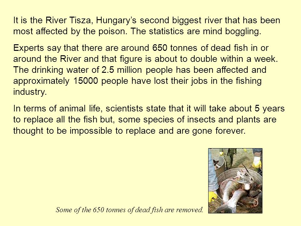 It is the River Tisza, Hungarys second biggest river that has been most affected by the poison. The statistics are mind boggling. Experts say that the