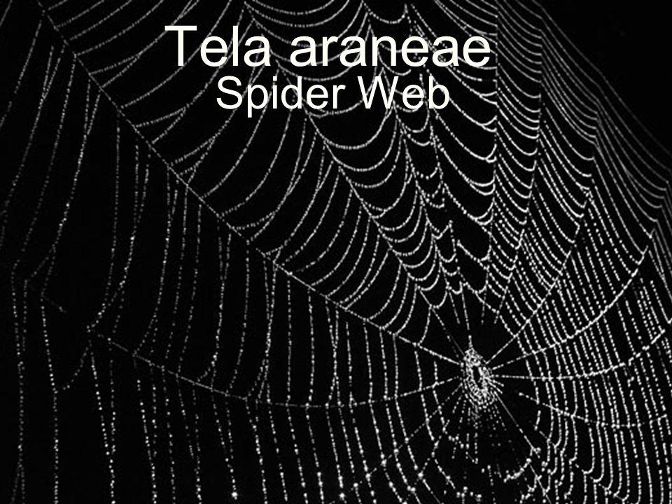 Tela araneae Spider Web