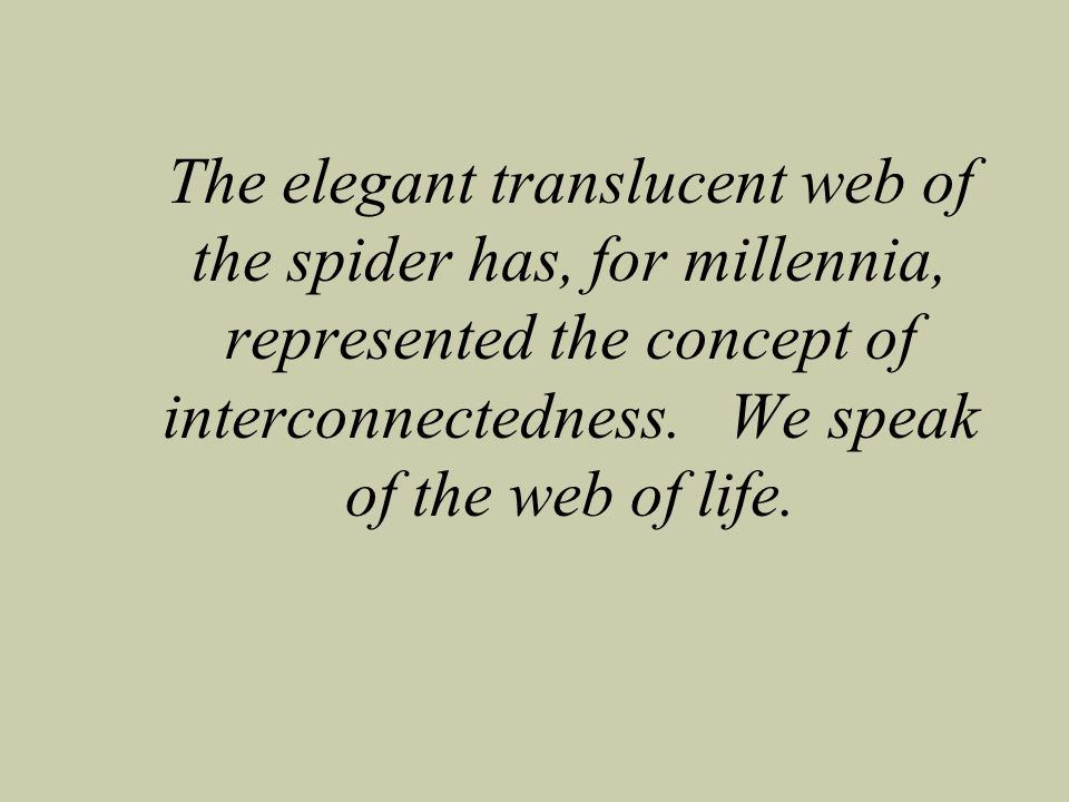 The elegant translucent web of the spider has, for millennia, represented the concept of interconnectedness. We speak of the web of life.