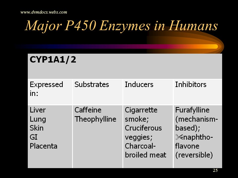 www.dvmdocs.webs.com 25 Major P450 Enzymes in Humans
