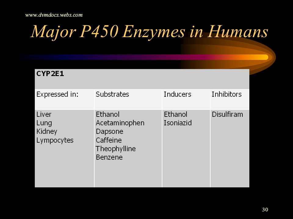www.dvmdocs.webs.com 30 Major P450 Enzymes in Humans