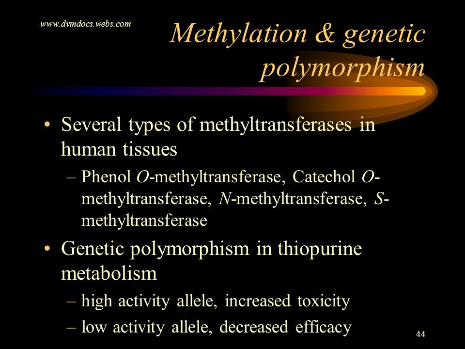 www.dvmdocs.webs.com 44 Several types of methyltransferases in human tissues –Phenol O-methyltransferase, Catechol O- methyltransferase, N-methyltrans
