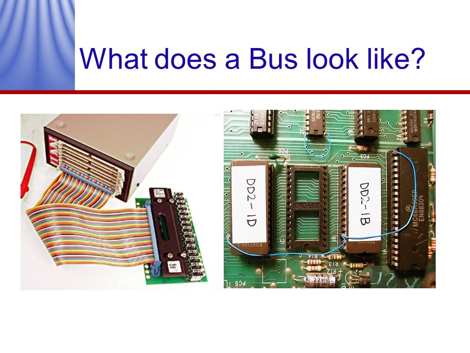 What does a Bus look like?
