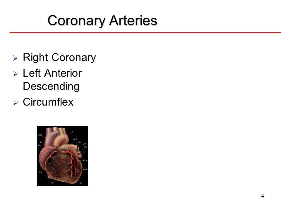 Coronary Arteries 4 Right Coronary Left Anterior Descending Circumflex