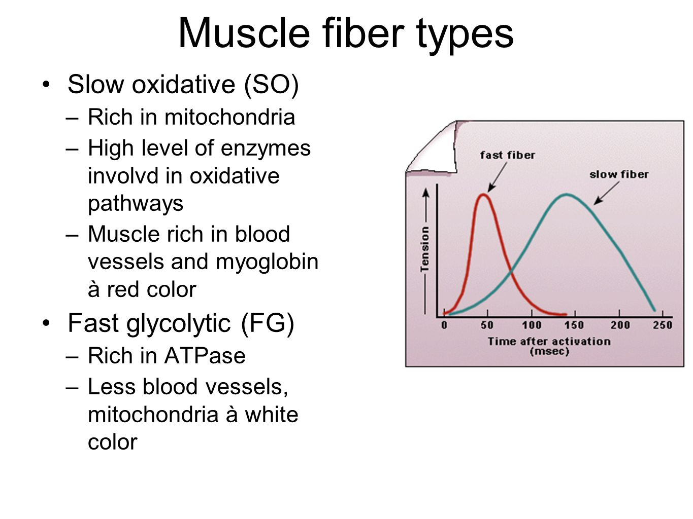 Muscle fiber types Slow oxidative (SO) –Rich in mitochondria –High level of enzymes involvd in oxidative pathways –Muscle rich in blood vessels and myoglobin à red color Fast glycolytic (FG) –Rich in ATPase –Less blood vessels, mitochondria à white color
