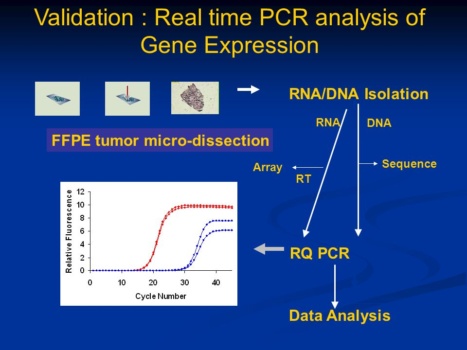 RNA/DNA Isolation RQ PCR Data Analysis RNA FFPE tumor micro-dissection DNA Sequence Validation : Real time PCR analysis of Gene Expression RT Array