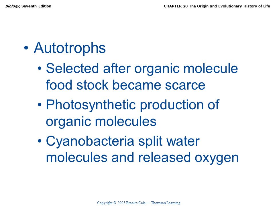 Copyright © 2005 Brooks/Cole Thomson Learning Biology, Seventh EditionCHAPTER 20 The Origin and Evolutionary History of Life Autotrophs Selected after organic molecule food stock became scarce Photosynthetic production of organic molecules Cyanobacteria split water molecules and released oxygen