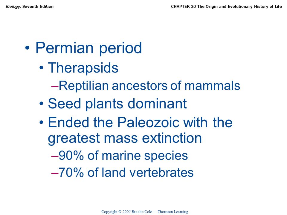 Copyright © 2005 Brooks/Cole Thomson Learning Biology, Seventh EditionCHAPTER 20 The Origin and Evolutionary History of Life Permian period Therapsids –Reptilian ancestors of mammals Seed plants dominant Ended the Paleozoic with the greatest mass extinction –90% of marine species –70% of land vertebrates