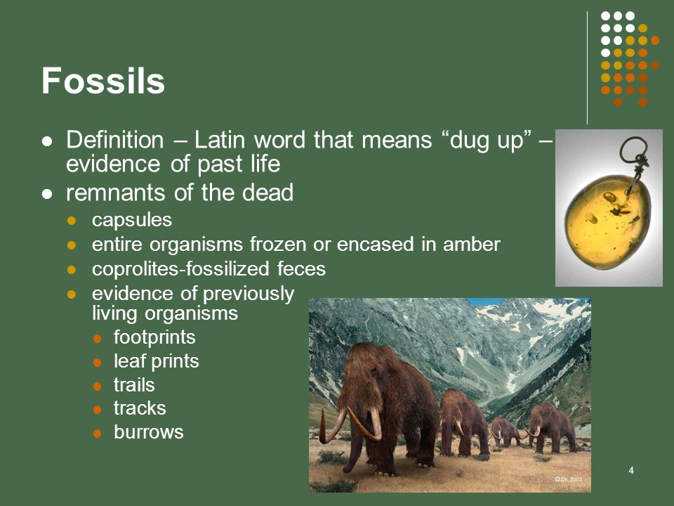 4 Fossils Definition – Latin word that means dug up – evidence of past life remnants of the dead capsules entire organisms frozen or encased in amber
