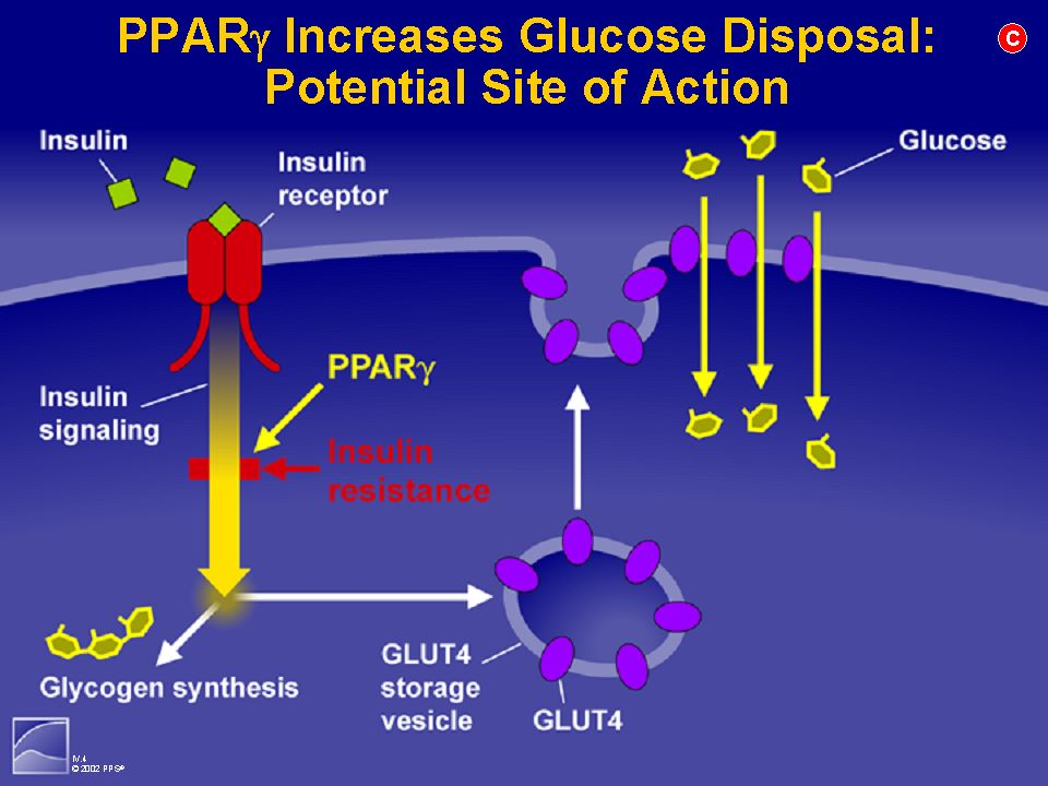 THE PPAR FAMILY OF NUCLEAR RECEPTORS LIGAND PPAR α PPAR δPPAR γ RECEPTOR EFFECT FIBRATESTHIOZOLIDINEDIONES FATTY ACIDS LIPOPROTEIN EXPRESSION PEROXISO