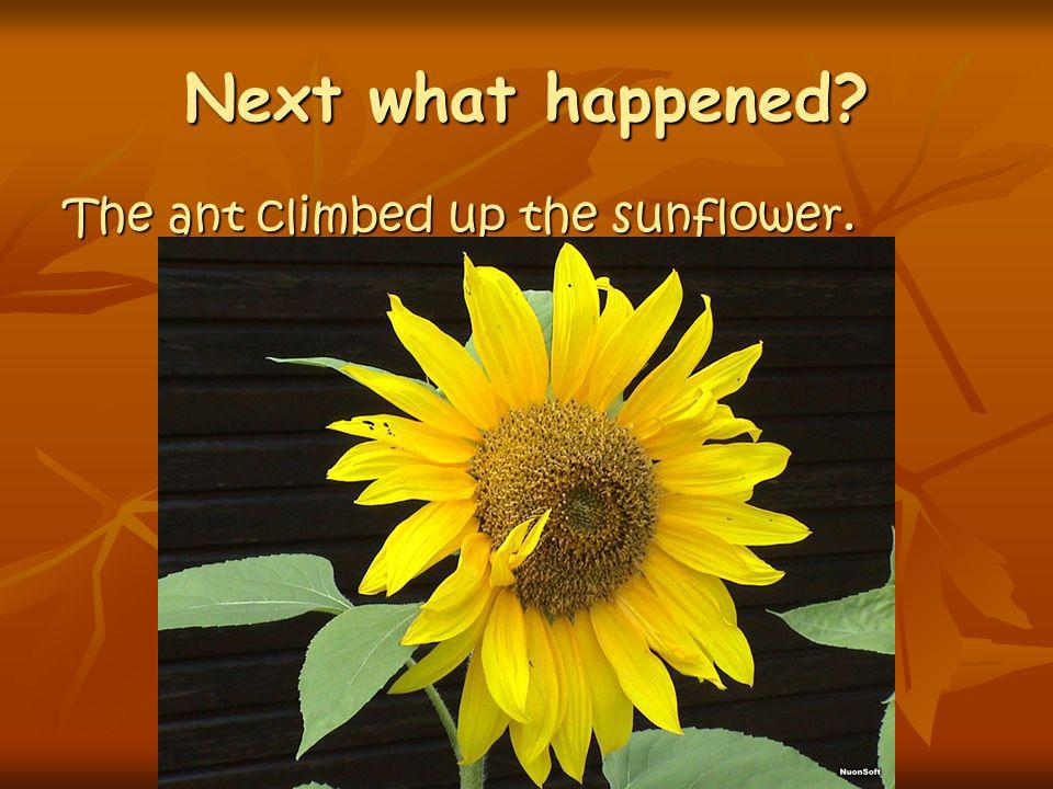 Next what happened? The ant climbed up the sunflower.