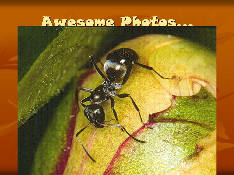 Awesome Photos…