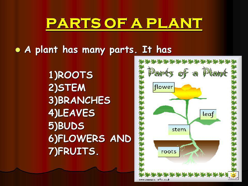 PARTS OF A PLANT A plant has many parts. It has A plant has many parts. It has 1)ROOTS 1)ROOTS 2)STEM 2)STEM 3)BRANCHES 3)BRANCHES 4)LEAVES 4)LEAVES 5