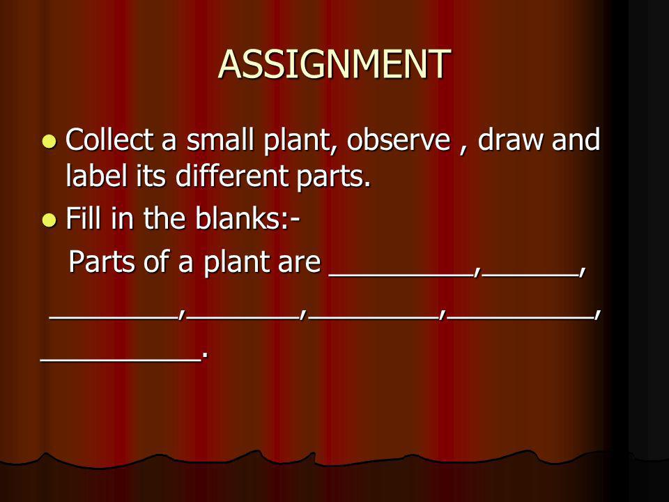 ASSIGNMENT Collect a small plant, observe, draw and label its different parts. Collect a small plant, observe, draw and label its different parts. Fil