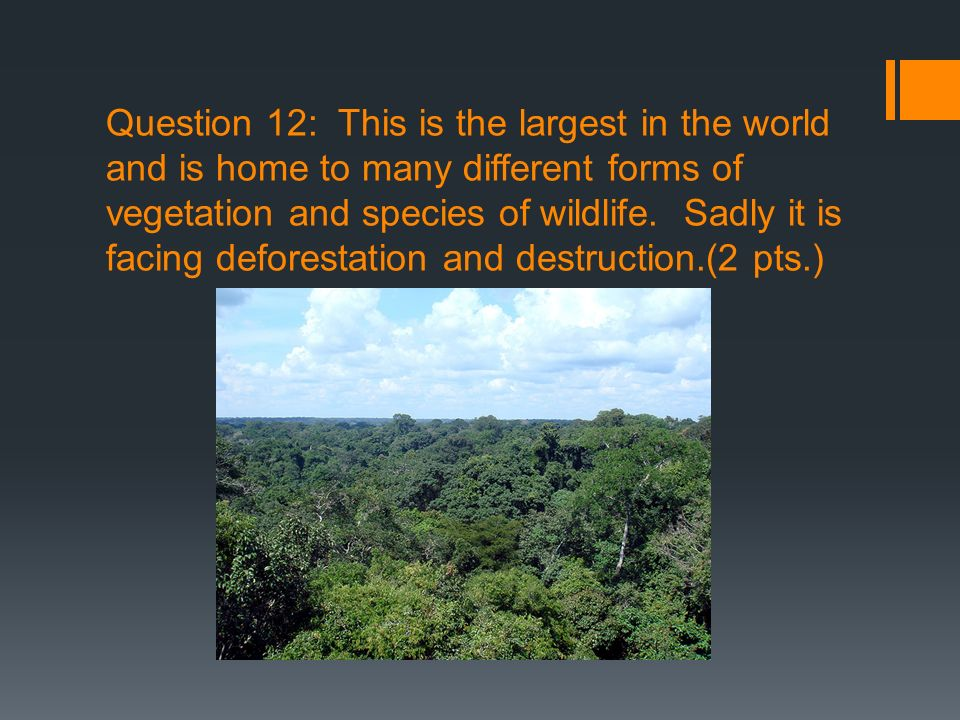Question 12: This is the largest in the world and is home to many different forms of vegetation and species of wildlife. Sadly it is facing deforestat