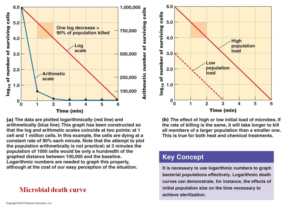 Microbial death curve