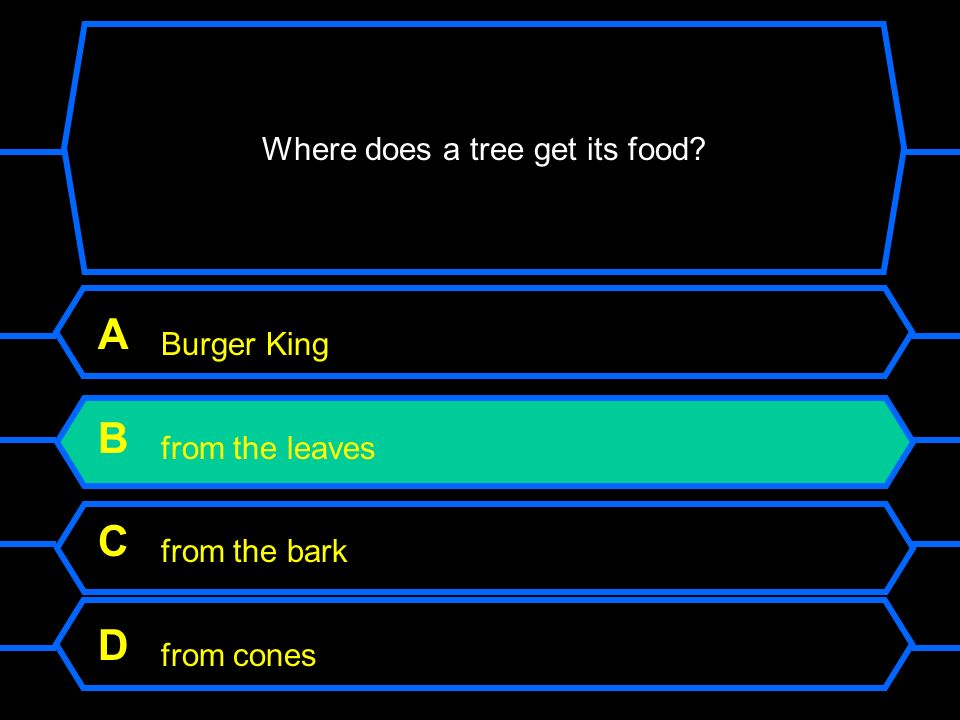 Where does a tree get its food? A Burger King B from the leaves C from the bark D from cones