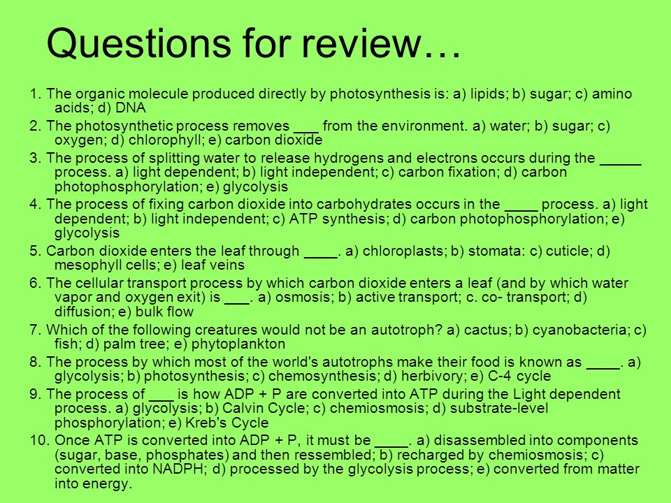 Questions for review… 1. The organic molecule produced directly by photosynthesis is: a) lipids; b) sugar; c) amino acids; d) DNA 2. The photosyntheti