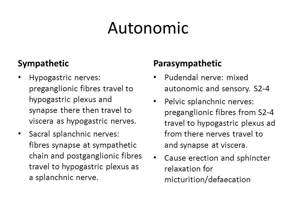 Autonomic Sympathetic Hypogastric nerves: preganglionic fibres travel to hypogastric plexus and synapse there then travel to viscera as hypogastric ne