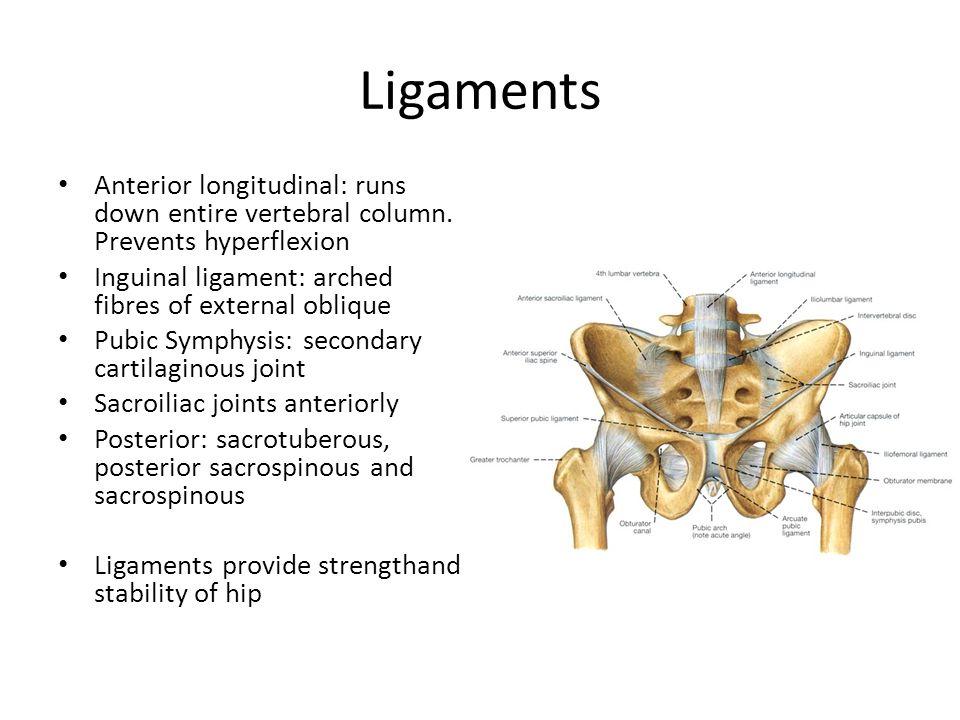 Ligaments Anterior longitudinal: runs down entire vertebral column. Prevents hyperflexion Inguinal ligament: arched fibres of external oblique Pubic S