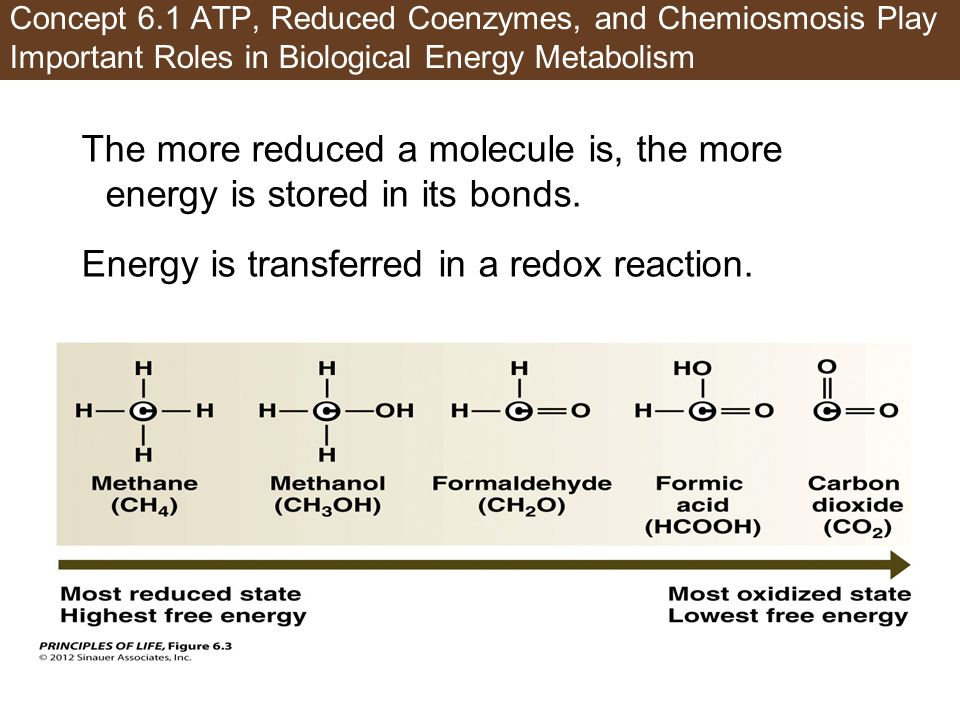 Concept 6.1 ATP, Reduced Coenzymes, and Chemiosmosis Play Important Roles in Biological Energy Metabolism The more reduced a molecule is, the more ene